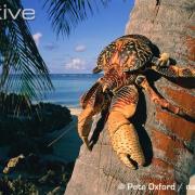 Quelle est l'espèce présente sur la photo ? (Niveau 1)