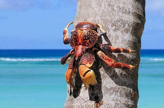 crabe110.jpg